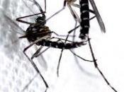 CHIKUNGUNYA: technique moustique stérile pour leurrer femelles infidèles IRD-PLoS