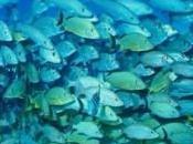 poissons rétrécissent cause changement climatique