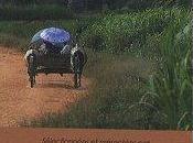 Nouvelles Chroniques Madagascar (Sélectionnées présentées Dominique Ranaivoson)
