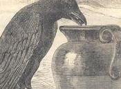 corbeau cruche