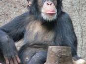 Efficience marchés pourquoi singes sont-ils aussi bons banquiers