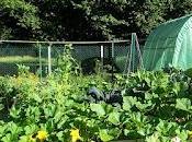 Comment jardiner dans potager carrés, butte, keyhole
