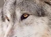 minute philosophie Waka loups