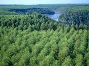 production biocarburants menace écologique