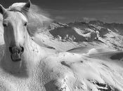 Maginifiques photos surréalistes Thomas Barbèy