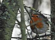 comptage oiseaux jardins c'est week-end