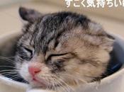 petit chat découvre joies bain