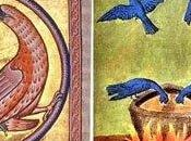 langue oiseaux, faune