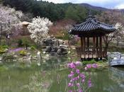 Tour Corée