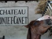 Pontet Canet, goutte dans océan crus classés