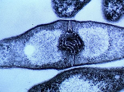 cellules étaient vraies dominatrices monde?