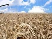 s'alliant, paysans, meuniers boulangers défient marché