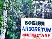 sanctuaire papillons forêt Bobiri