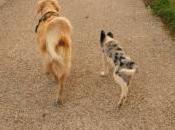 Nouveau! Promenades collectives avec vous votre chien!