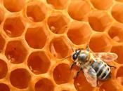 fable abeilles
