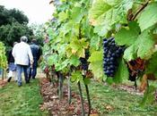 Journées Patrimoine 2013 Conservatoire Vignoble Charentais