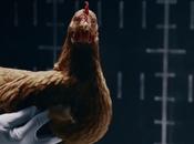 [Publicité Drôle] poules incroyables dans nouveau spot Mercedes