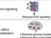 OBÉSITÉ infantile: gène muté augmente l'appétit Cell