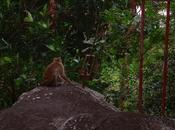 Quelques astuces pour passer bonnes vacances dans pays tropical