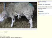 Annonce Coin Mouton pattes