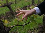 François Despagne Grand Corbin: vigne jardin!