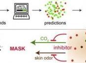 PALUDISME: nouveaux leurres odorants pour berner moustique Cell