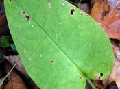 feuilles cœur