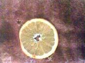 Tiramisu orange chicorée