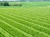 Agroalimentaire: renforcer liens entre recherche entreprise menu rencontres internationales Alger