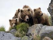 """""""Terre ours"""" magnifique!"""