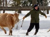 Robert Pattinson prêt pour salon l'agriculture