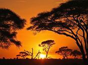 Afrique tribalisme, régionalisme développement