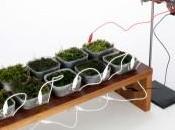 panneau solaire végétal