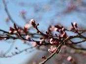 avant-goût printemps