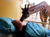 adieux émouvants entre gardien atteint d'un cancer girafe