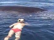 Liberez baleine