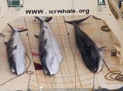 Article minutes l'arrêt chasse baleine