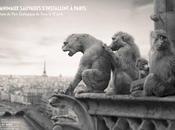 animaux sauvages s'installent Paris