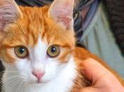 France reconnaît animaux qualité êtres sensibles