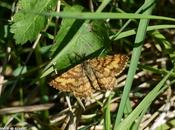 papillon nuit très actif pendant jours ensoleillés...