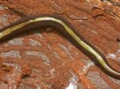 escargots lombrics victimes tueurs série