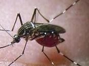 Pronostic dengue Coupe Monde Brésil prévisions climatiques saisonnières temps réel comme force motrice modèle cadre d'alerte précoce