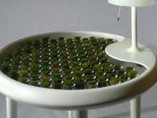 plantes salon électriques