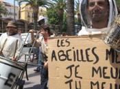 """4.500 ruches """"mortes"""" dans région Perpignan"""