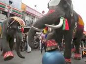Thaïlande éléphants font leur coupe monde 2014