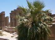 Salle vitrine côté seine taouret perception palmier -doum sein croyances phyto-religieuses égyptiennes