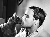 [PORTFOLIO] Marlon Brando mythe s'efface jamais