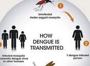 INFO/VOYAGE Symptômes remèdes contre Dengue