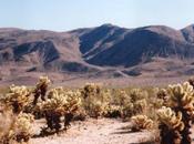 Anza-Borrego: tranche désert californien