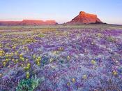 milliers fleurs dans désert